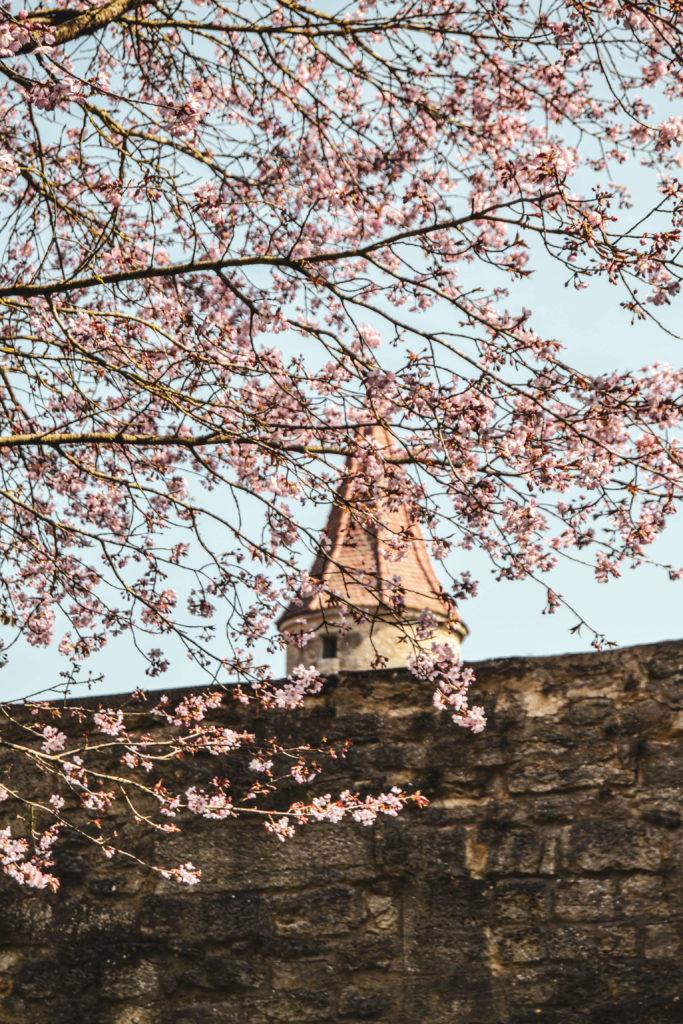 Fruehling Rothenburg ob der Tauber