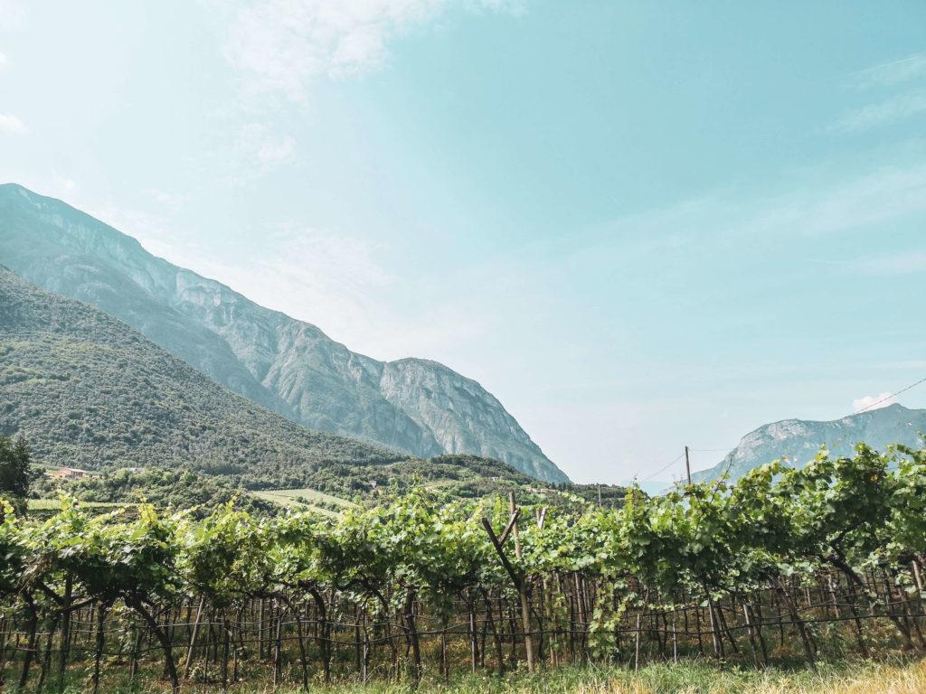 Weinberge Trentino