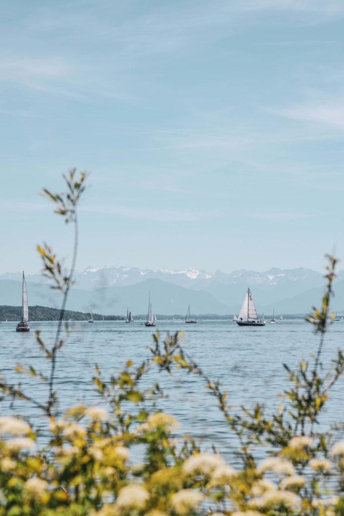 Starnberger See Blumen und Boote