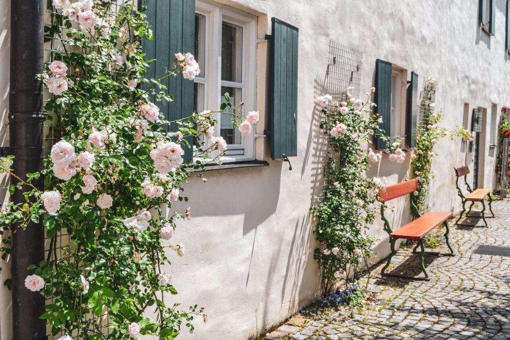 Innenhof Schloss Blutenburg Mauer mit Rosen