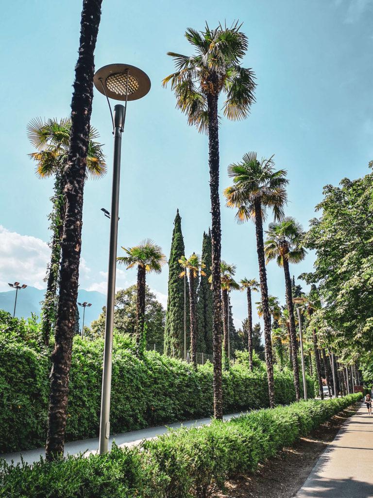 Palmenallee in Riva del Garda