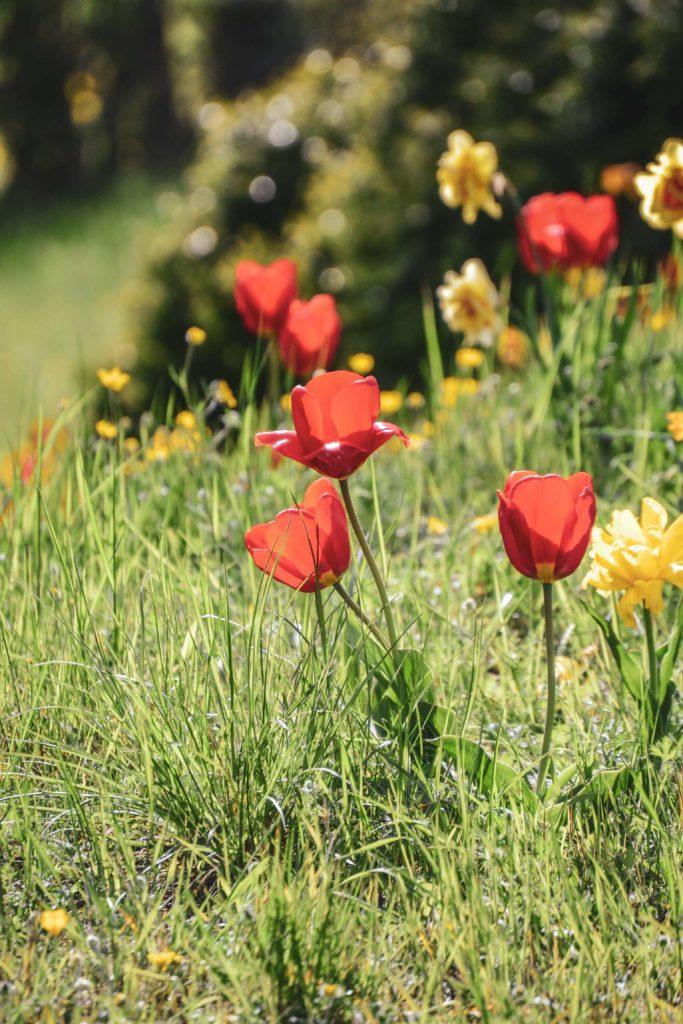 Frühlingsblumen Felsengarten Sanspareil