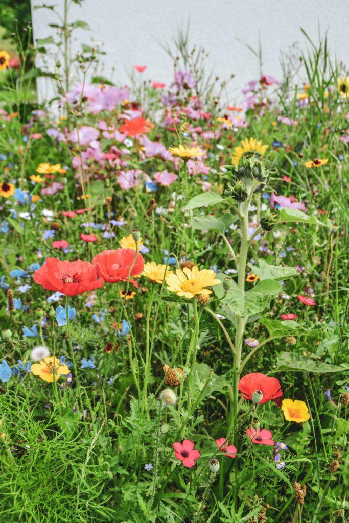 Wildblumen Fraenkische Schweiz