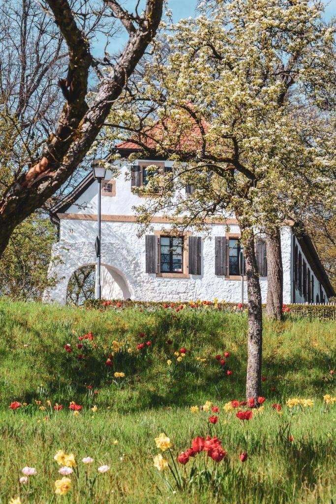 Sanspareil Bauernhaus mit Blumenwiese